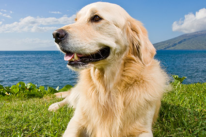 The IKC develops dogs into happy, loyal and well-behaved companions.