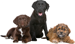group-dogs