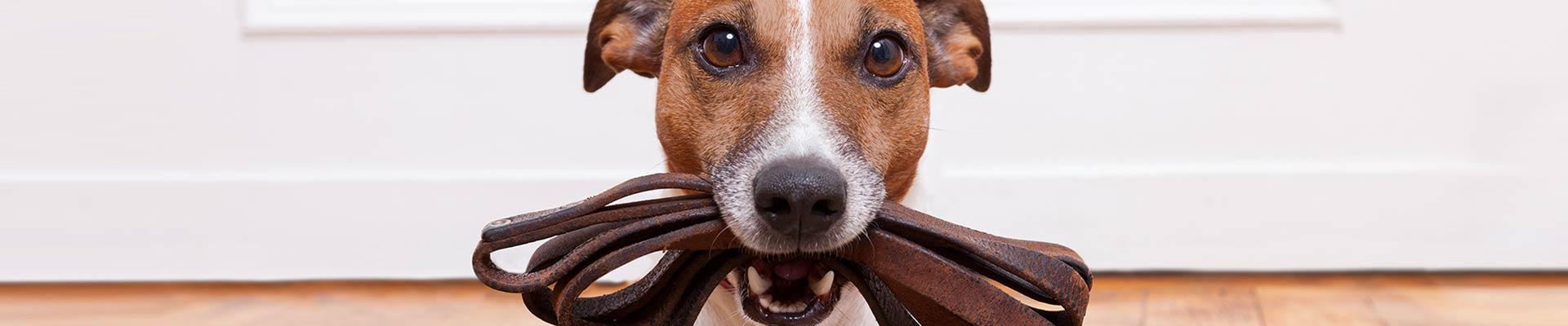 Registration Fees - The Irish Kennel Club