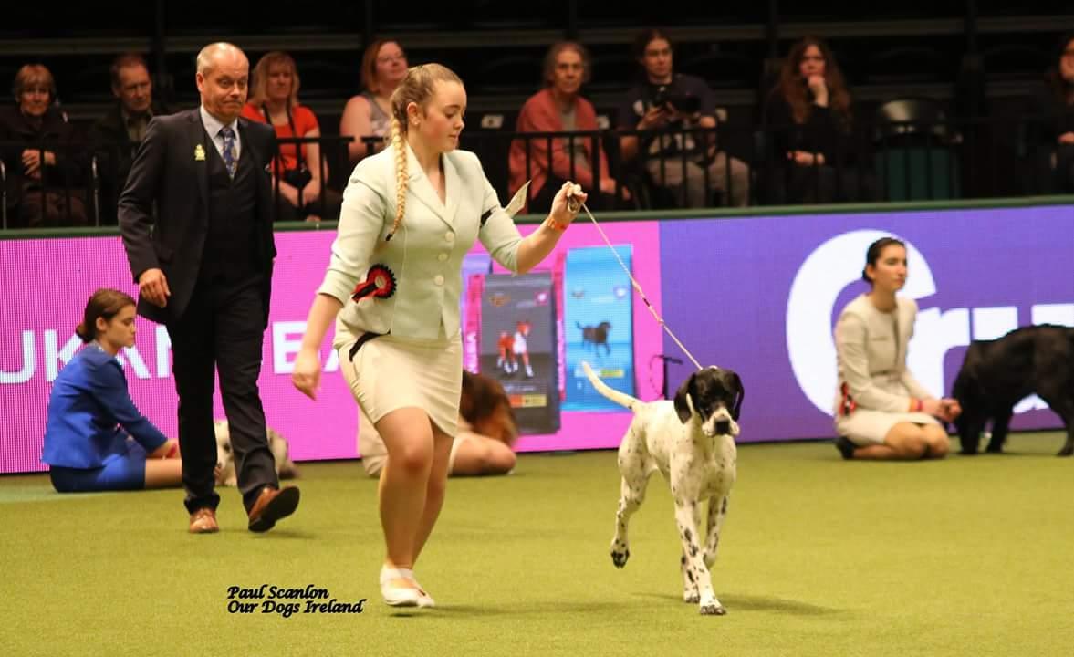 International Dog Show Dublin Address